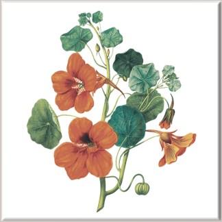 Red Nasturtium Flowers Ceramic Wall Tile