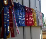 ribbons-from-horse-show