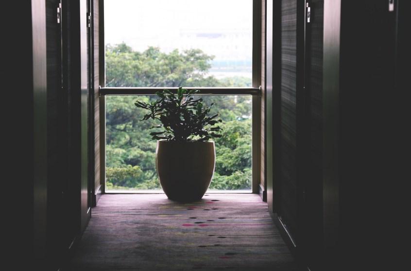 Plantas de interior online cuidados verano florestore - Plantas de interior online ...