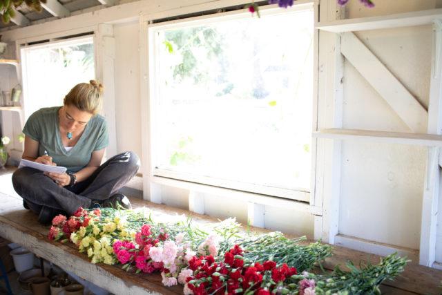 Carnation trial at Floret