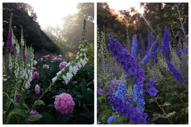 Chatsworth Gardens on Floret blog