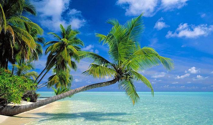 palm-trees1