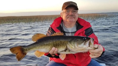 Congregating Florida Largemouth Bass in Kissimmee on Lake Toho