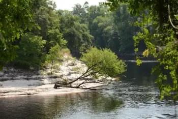 The Suwannee River in Live Oak. Photo: Jake Galvin