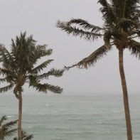 How to prepare for a Hurricane In Florida?