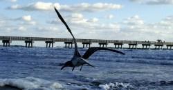 Jacksonville Beach.jpg