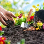 GARDENING 101: CHOOSING THE RIGHT PLANTS FOR YOUR ZONE