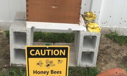 MY BEE KEEPING EXPERIENCE
