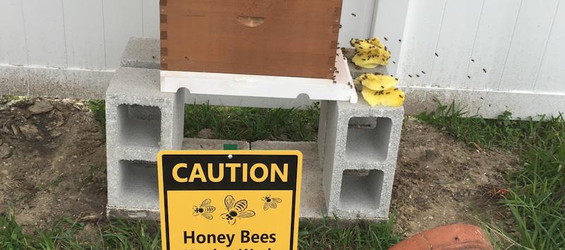 MY BEE KEEPING EXPERIENCE