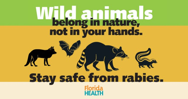 Rabies can be passed through the saliva and nervous tissue of a rabid animal through a bite or scratch or through contact with the mucous membranes of the eyes, nose or mouth.