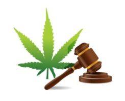 florida law marijuana