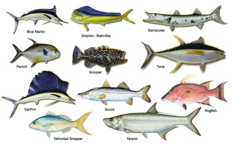 Image result for florida keys fish