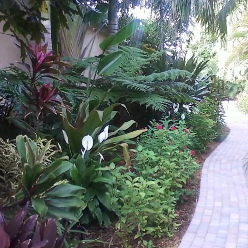 Tropical Walk
