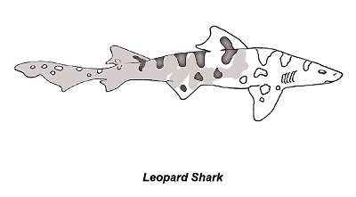Shark Species Coloring Pages Discover Fishes