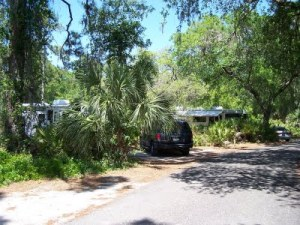 Campsites at Oscar Scherer State Park