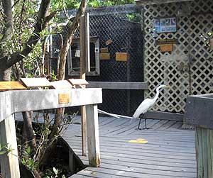 Florida Keys Wild Bird Center: Trying to break in