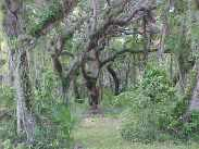 The Hammock Trail at Sebastian Inlet State Park