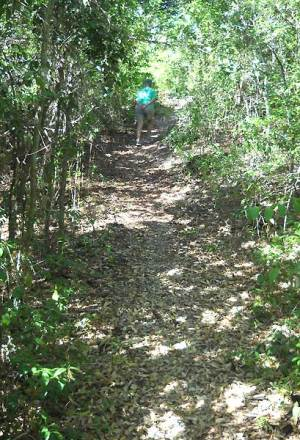 Mound Key Archaeological State Park trail