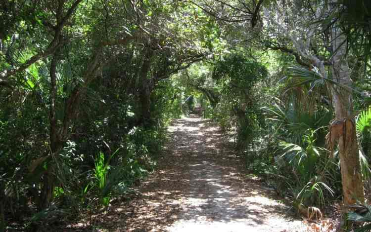 """Entrance """"tunnel"""" to the Castle Windy Trail at Canaveral National Seashore"""