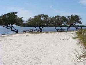 Beach picnic area at Curry Hammock State Park