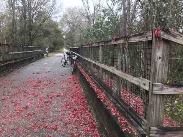 The seeds of a Florida native red maple tree decorated one of the bridges on the Van Fleet State Trail on our February ride. (Photo: Bonnie Gross)