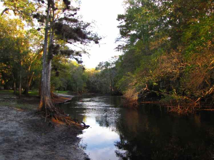 Withlacoochee River by B A Bowen Photography