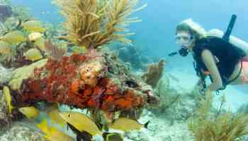 Best Snorkeling In Florida Where To Explore From The Shore - The snorkeling guide to florida 10 spots for underwater exploring