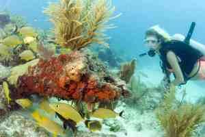 Diver explores coral reef