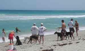 Dogs rule at Walton Rocks Beach on Hutchinson Island