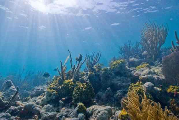 Underwater scene at Biscayne National Park