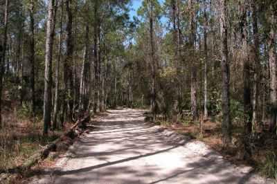 Entry road to Princess Place Preserve, Palm Coast, Florida