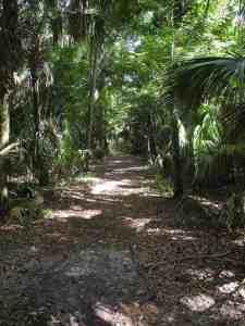 Cypress Swamp Trail aHighlands Hammock State Park in Sebring.
