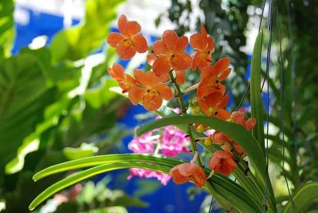 Fairchild Tropical Garden by James Good