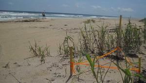 Secret beach: Hobe Sound NWR turtle nest