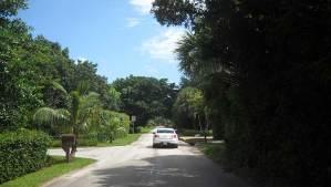 Biking Jupiter Island: Beach Road makes a good bike route.