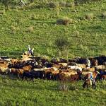Central Florida's cattle country would be preserved in new national wildlife refuge