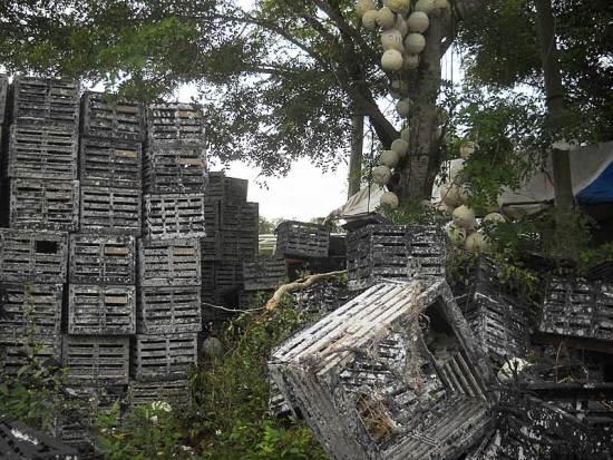 Crab traps in Everglades City