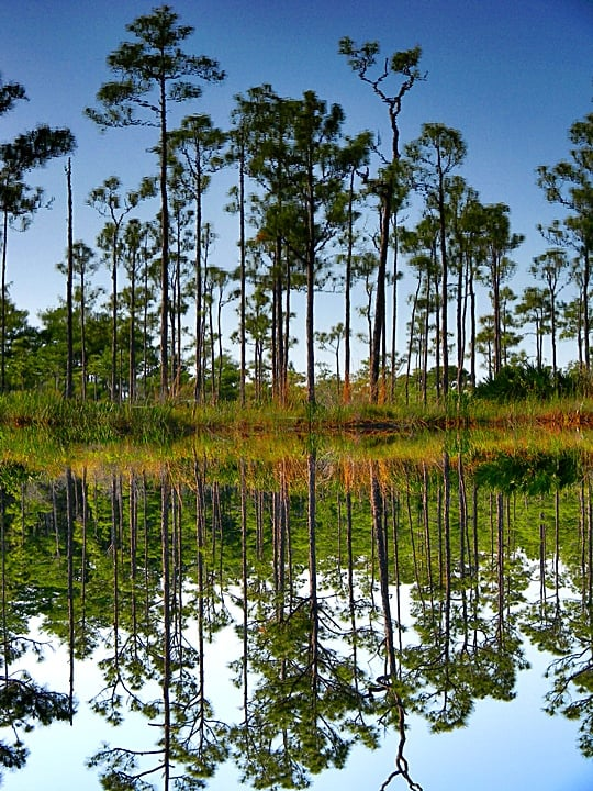 Jonathan Dickinson State Park reflections