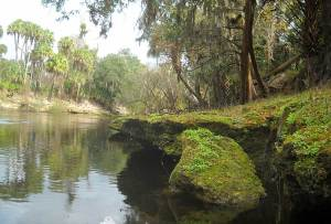 Rocky shore on Peace River, Florida, canoe trip
