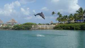 Florida Keys roadtrip and wildlife: Dolphin Research Center in Marathon