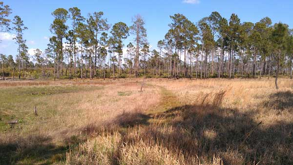 Dry pond in Ocala National Forest
