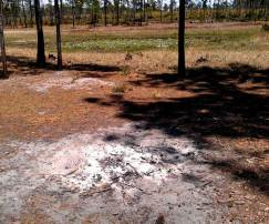 Campfire cleanup in Ocala National Forest