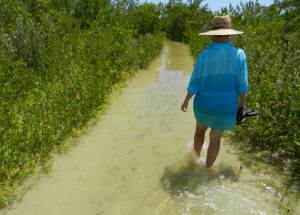Wading along the path to Tigertail Beach on Marco Island