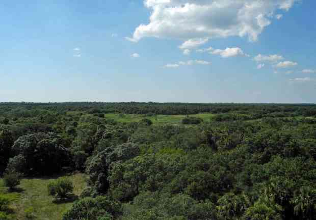 Tower view of Myakka River State Park