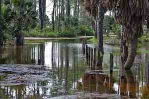 Flooding at St. Joseph Peninsula State Park - Tropical Storm Isaac