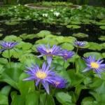 At Fairchild Tropical Garden