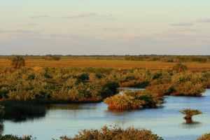 Merritt Island National Wildlife Refuge by Cyndi Sims Parr