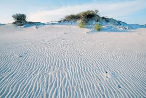 Dunes at Florida's Grayton Beach State Park