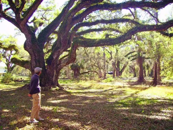 Ancient oaks arch over the Dade Battlefield Historic State Park.