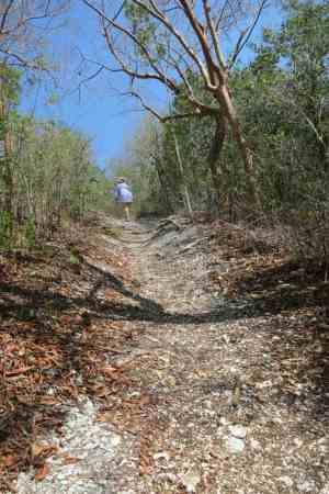 Trail with a real hill at Mound Key State Archaeological Park.